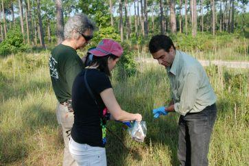 sampling Pinus palustris ECM in Texas, July 2013