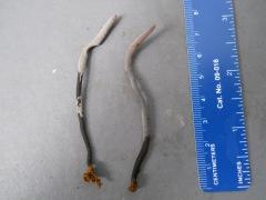 Clavulina dicymbetorum